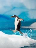 户外猎奇 超萌企鹅南极练轻功
